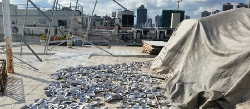 Where the Cape abalone ends up: shucked abalone shells on top of a non-descript building in New Territories, Hong Kong, where almost all abalone smuggled from Africa ends up as part of the fei qian chain before being smuggled into Mainland China.